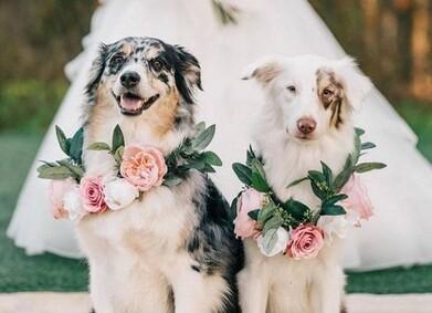 Питомец на свадьбе: что нужно учесть?