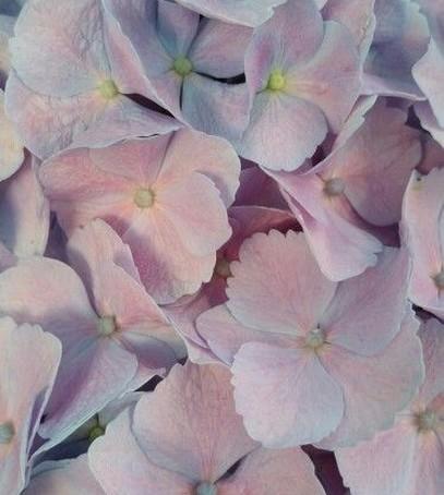 розовый кварц и серенити