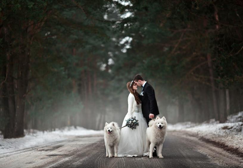 Свадебная фотосессия с собаками лайками зимой