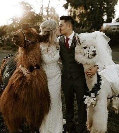 свадебные клятвы смешные