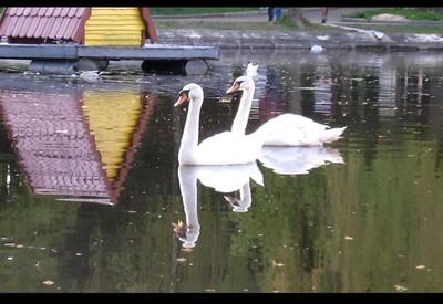 Парк Лебединое озеро (Лебединка) - портфолио 5