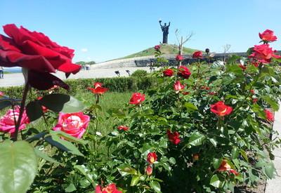 Парк Долина роз - портфолио 5