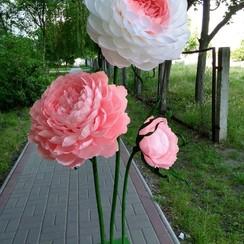 Big flowers - фото 1