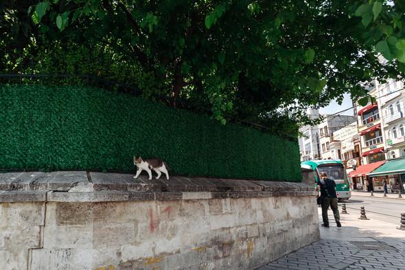 Надеежда и Сергей. Стамбул - фото №57
