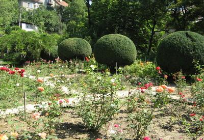 Ботанический сад - место для фотосессии в Ужгороде - портфолио 5