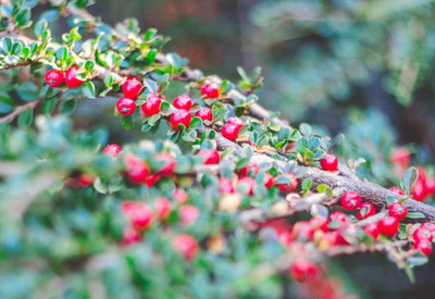 Ботанический сад - фото 2