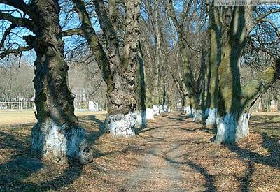 Новая Чертория - место для фотосессии в Херсоне - портфолио 4