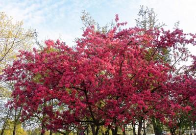 Парк Киото - место для фотосессии в Киеве - портфолио 3