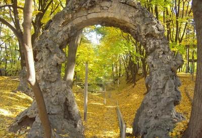Парк Института педиатрии, акушерства и гинекологии - место для фотосессии в Киеве - портфолио 2