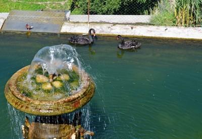 Сквер Лебединое озеро - место для фотосессии в Каменце-Подольском - портфолио 4