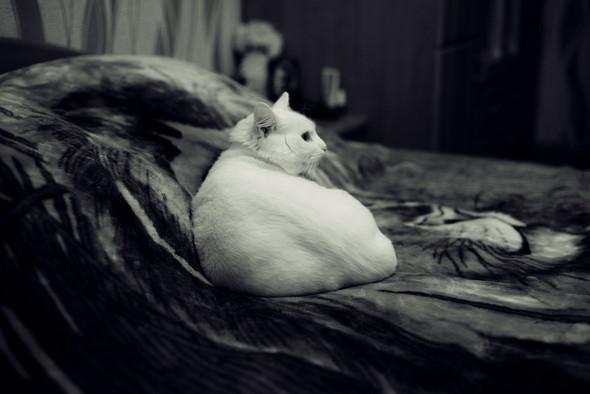 Виолетта & Никита - фото №23