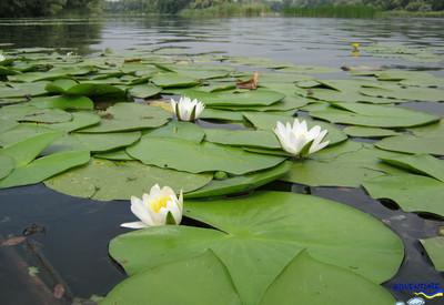 Затопленное село Гусинцы - место для фотосессии в Киевской области - портфолио 5