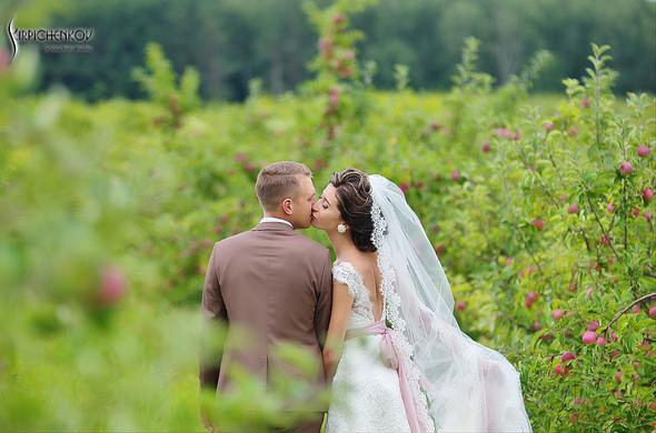 Свадебные фото в яблочном саду, г. Чернигов - фото №23