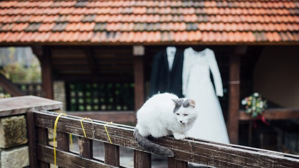 Два кота ОН и ОНА) - фото №1