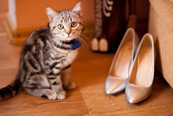 Серія ,,Про закоханих котів Бабенко,, - фото №12