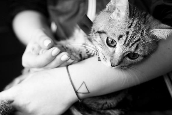 Серія ,,Про закоханих котів Бабенко,, - фото №13