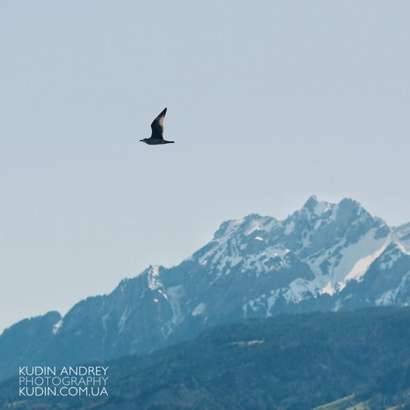 Love Story in Luzern - фото №14