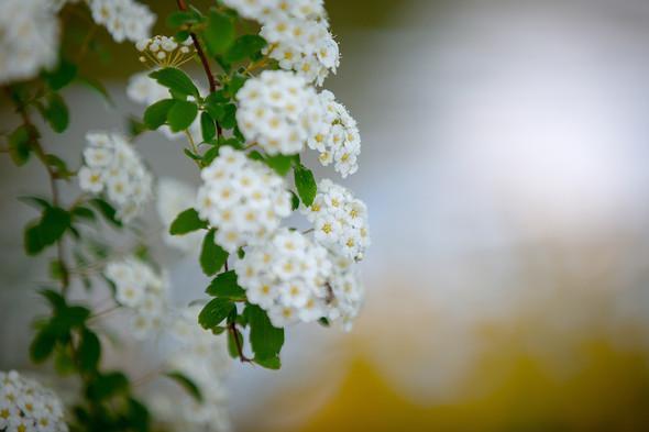 Весна для двоих - фото №15