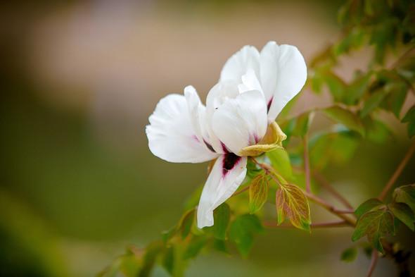 Весна для двоих - фото №14