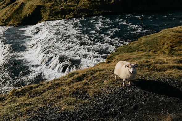 Послесвадебные приключения в Исландии - фото №53