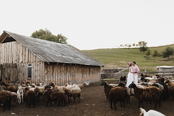 Sheepland lovestory - фото №20