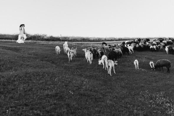 Sheepland lovestory - фото №33