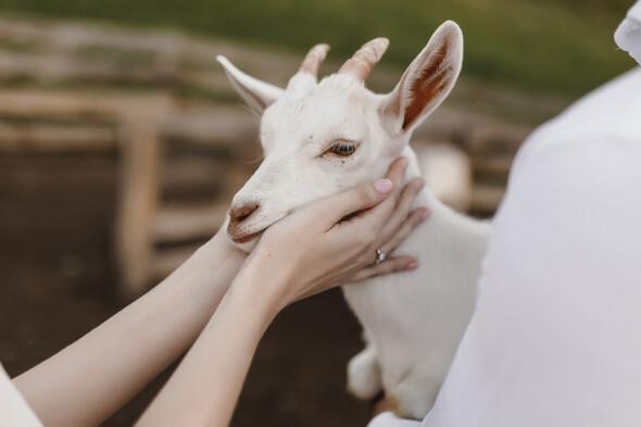 Sheepland lovestory - фото №14