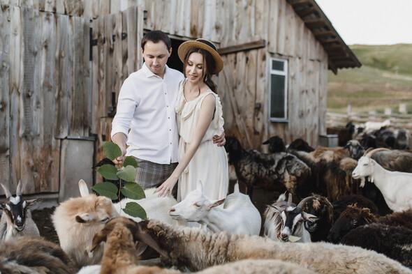 Sheepland lovestory - фото №2