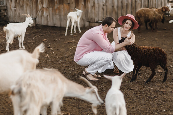 Sheepland lovestory - фото №29