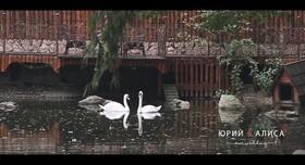 Генрих Николайчук - видеограф в Киеве - портфолио 2