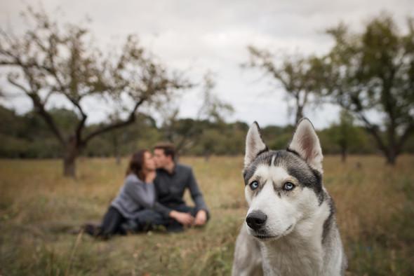 #любовьихаски - фото №12
