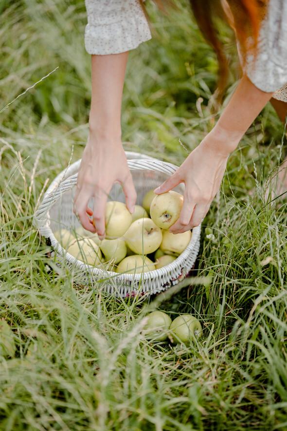Яблуневий садок - фото №12