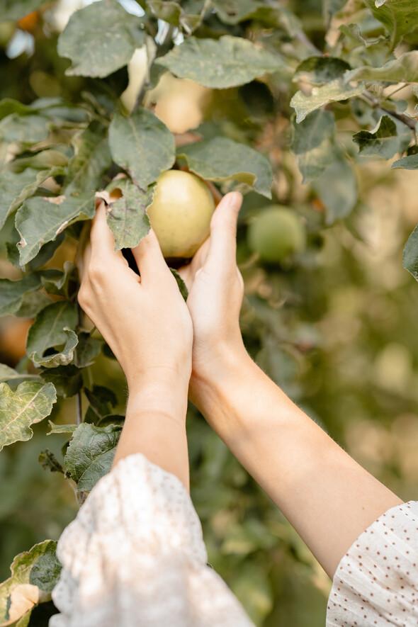 Яблуневий садок - фото №6