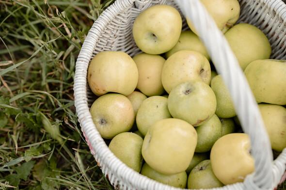 Яблуневий садок - фото №4