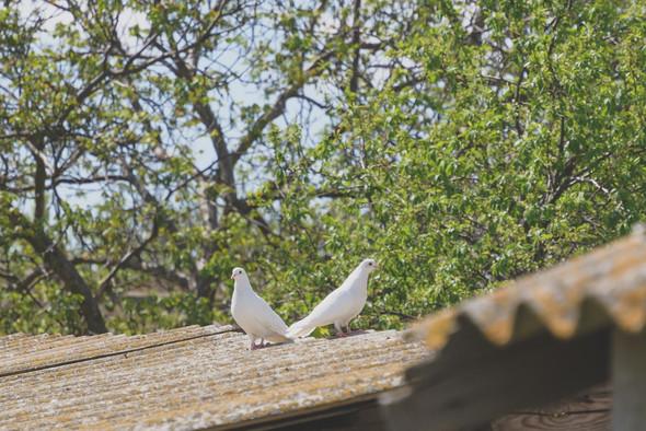 Любовь и голуби - фото №18