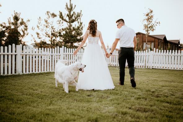 Retriver Wedding - фото №150
