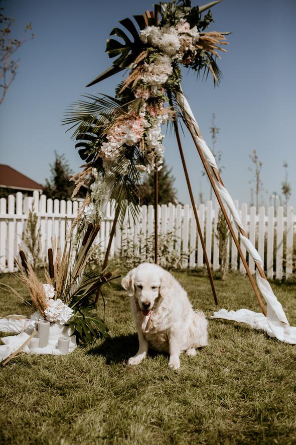 Retriver Wedding - фото №27