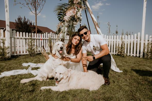 Retriver Wedding - фото №62