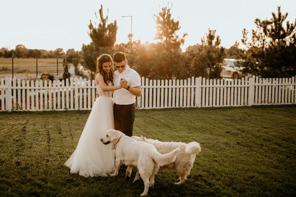 Retriver Wedding - фото №143
