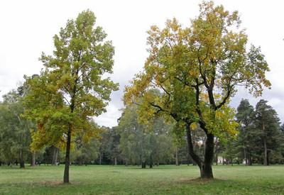 Державний дендрологічний парк «Олександрія» - место для фотосессии в Белой Церкви - портфолио 6