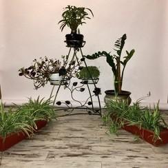 """""""Elite photo studio"""" - фотостудии в Днепре - фото 2"""