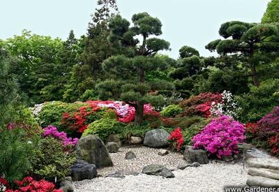 Ботанический сад им. Гришко - фото 3