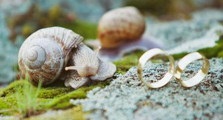 Апрельская акция! - 3000 грн. при заказе фотосъемки свадьбы на целый день.