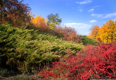 Ботанический сад - портфолио 4