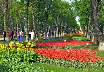 Дендропарк - место для фотосессии в Кропивницком - портфолио 4