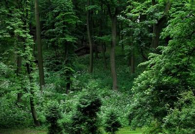 """Парк """"Высокий замок"""" - место для фотосессии в Львове - портфолио 2"""