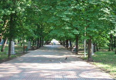 Городской сад - портфолио 2